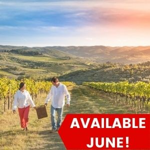 Half Day Chianti Wine Tour from Florence
