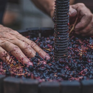 Tuscan Wine Making and Dinner Experience